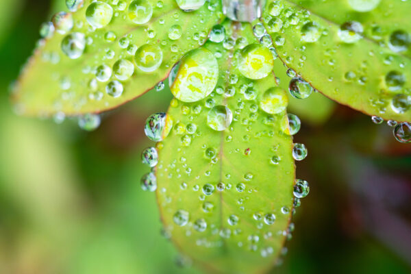 rain droplots running off a leaf